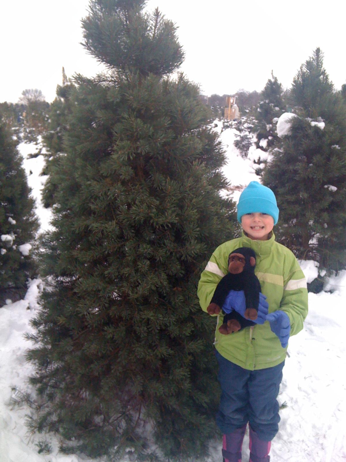 Fifi and the Christmas Tree.